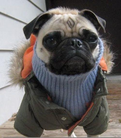 perros fashionistas14