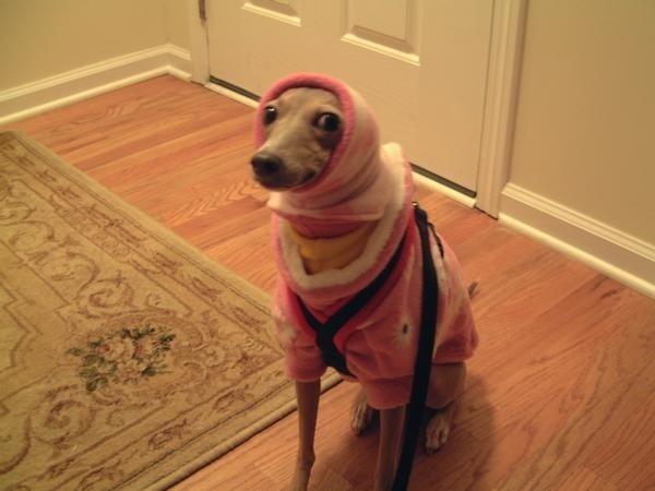 perros fashionistas4