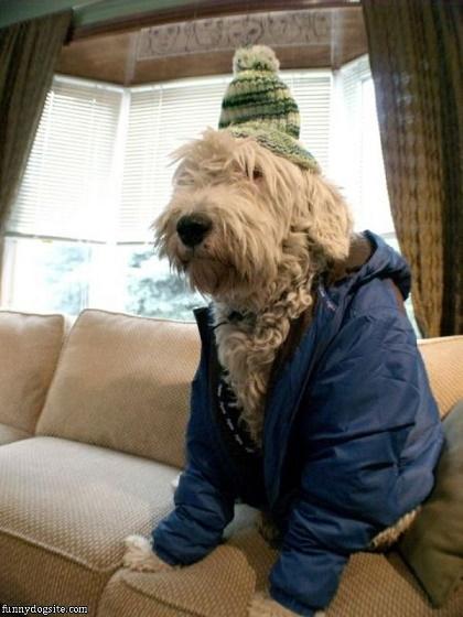 perros fashionistas5