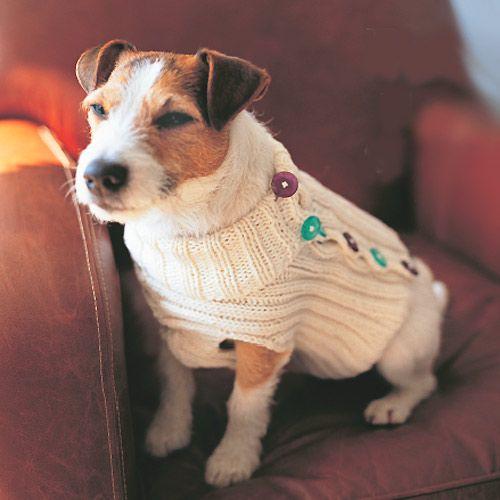 perros fashionistas6