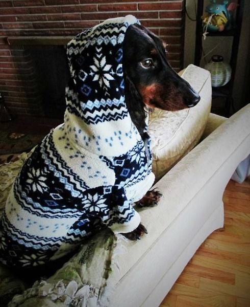 perros fashionistas8