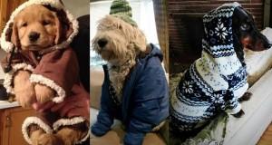 perros fashionistas9