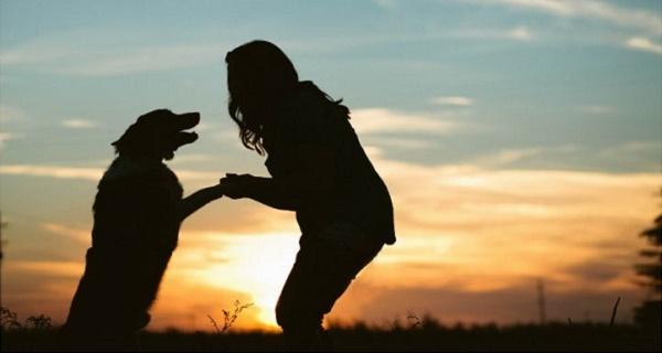 señales perros