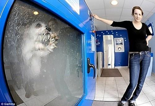 Dog-o-Matic washing machine