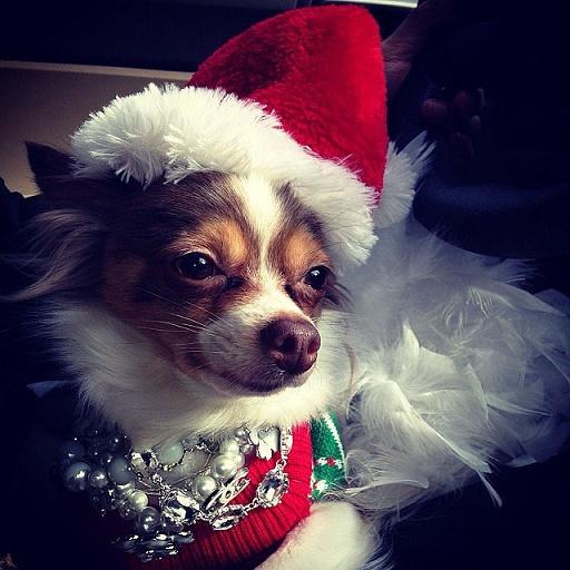 Dogs Donning Santa Hats11