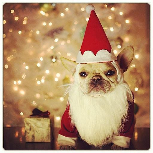 Dogs Donning Santa Hats5