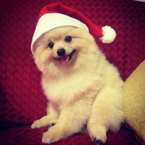 Dogs Donning Santa Hats6