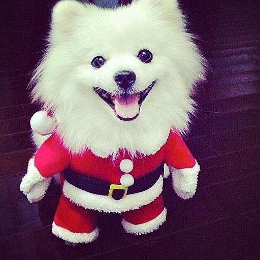 Dogs Donning Santa Hats9
