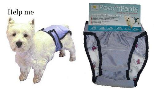 PoochPants8
