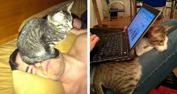 cat logic12
