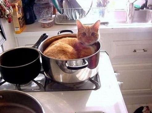 cat logic4