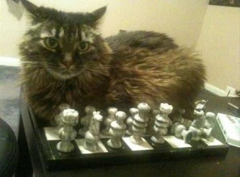 cat logic7