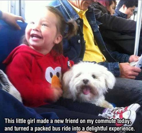perritoss
