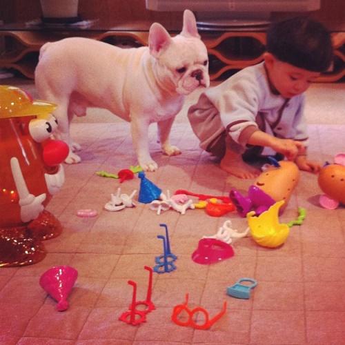 bebés y perros10