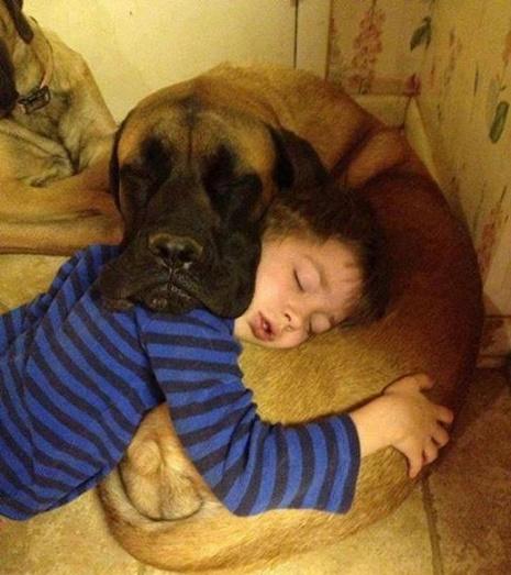 bebés y perros12