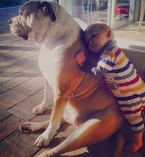 bebés y perros13