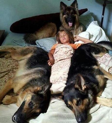 bebés y perros14