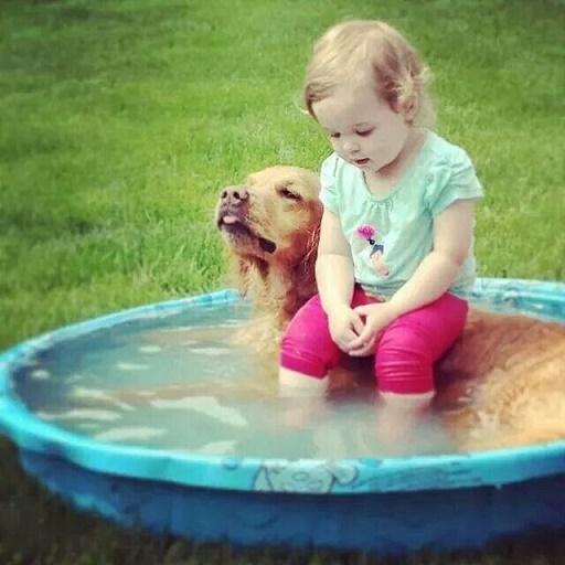bebés y perros15