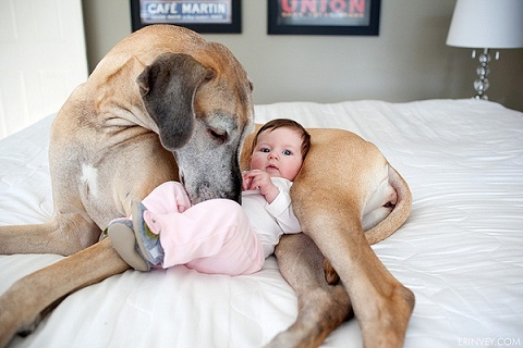 bebés y perros16