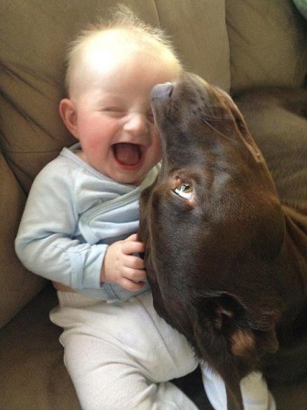 bebés y perros2