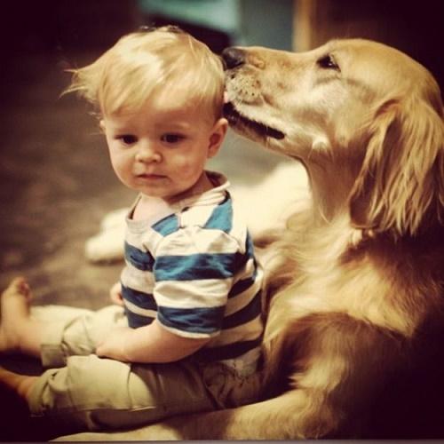 bebés y perros4