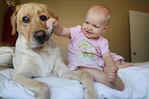 bebés y perros5