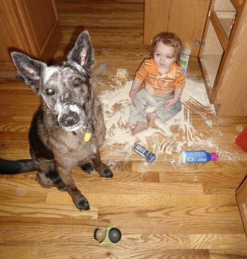 bebés y perros6