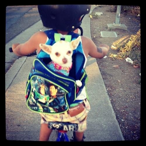 bebés y perros9