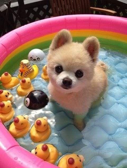 dog dream