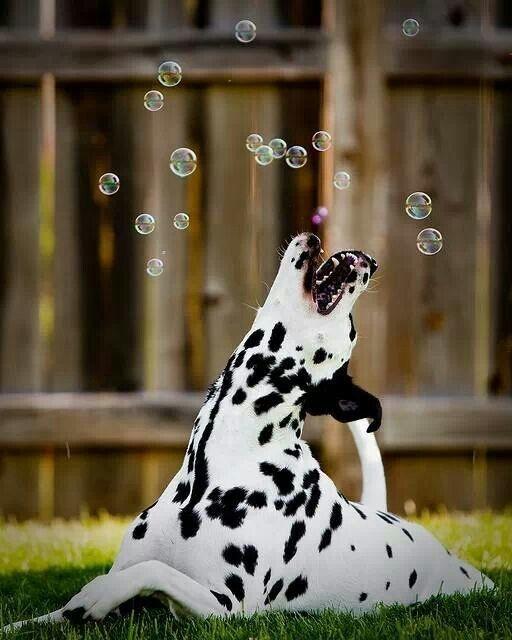 dog dream10
