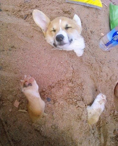 dog dream15