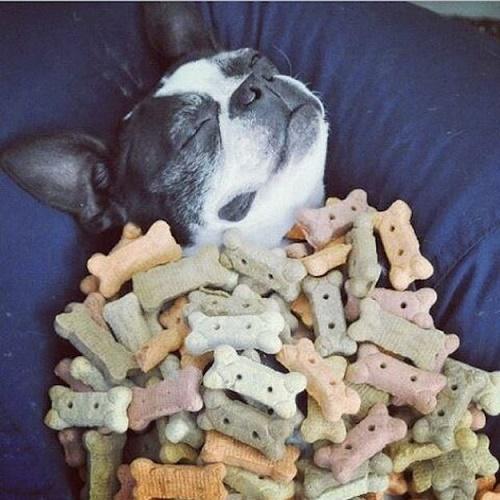 dog dream7