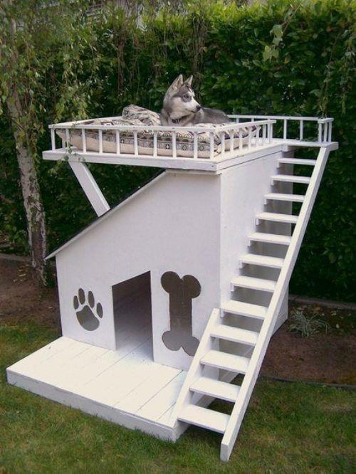 dog houses10