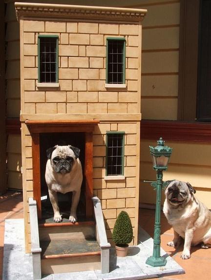 dog houses13