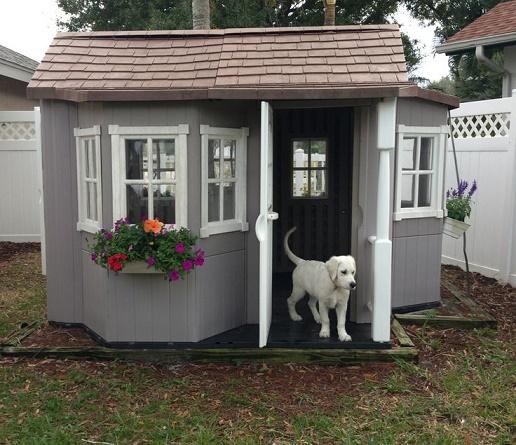 dog houses23