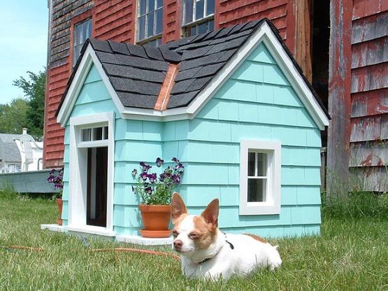 dog houses3