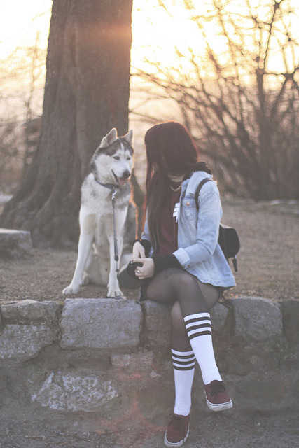 mejores amigas perro