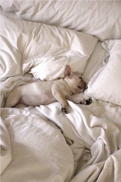 perros cama10