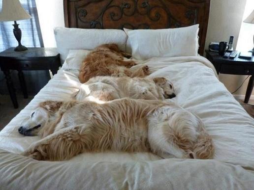 perros cama11