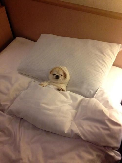 perros cama13