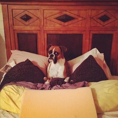 perros cama14