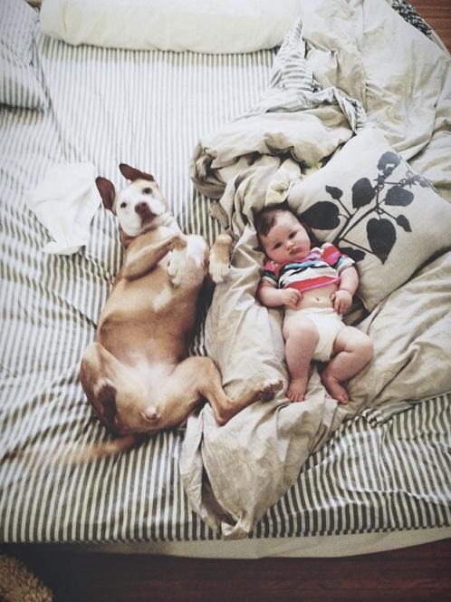 perros cama2