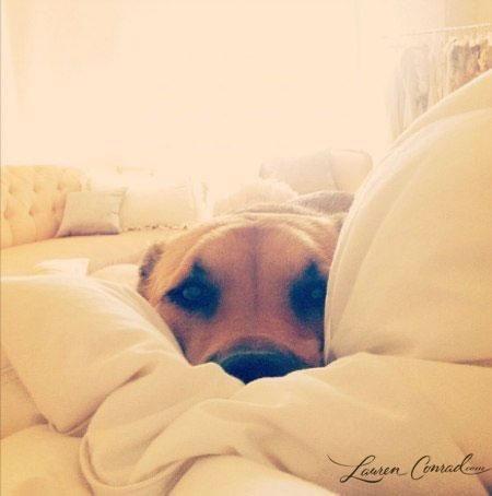 perros cama3