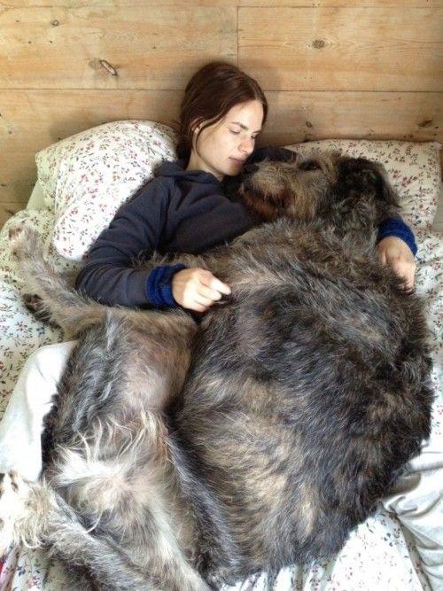 perros cama5