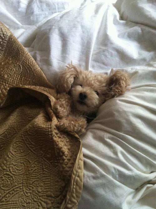 perros cama6