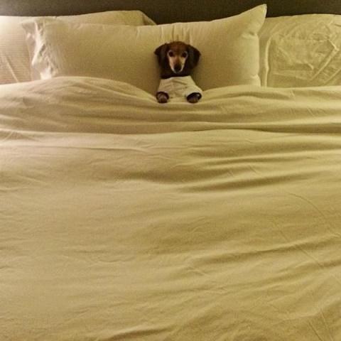 perros cama9