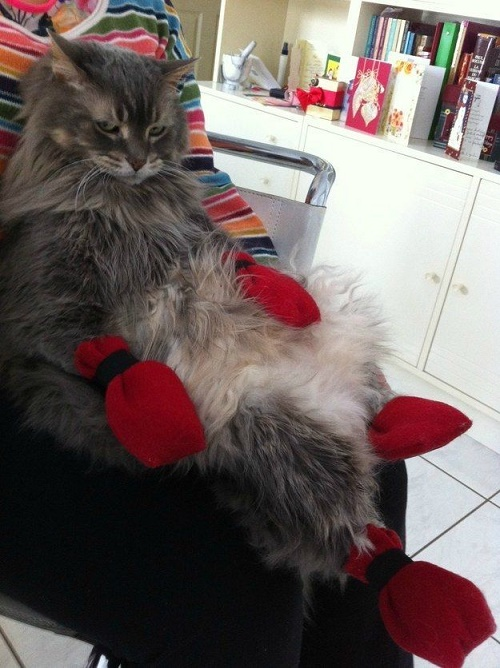 cats who are sick of you19