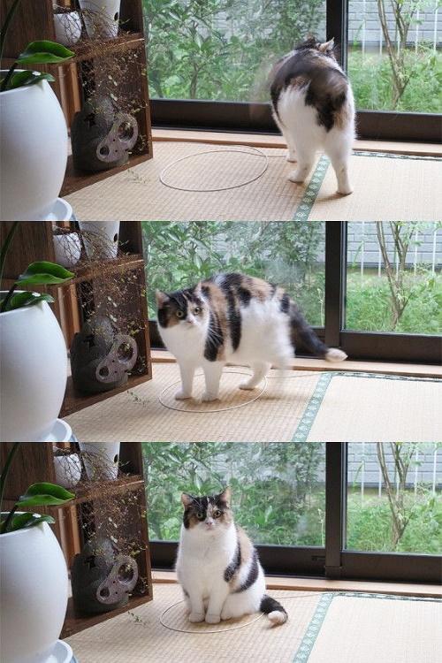 gatos sentados en círculos