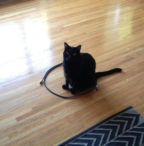 gatos sentados en círculos11