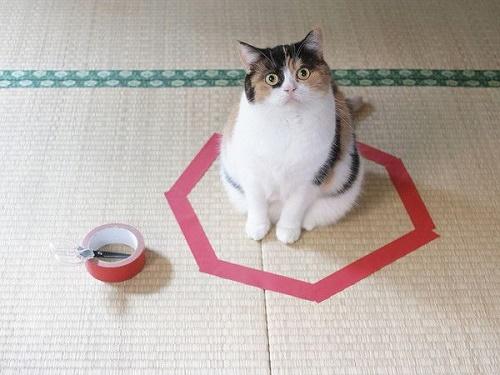 gatos sentados en círculos2
